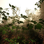 Скриншот The Forest – Изображение 39