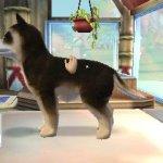 Скриншот Paws & Claws Pampered Pets Resort 3D – Изображение 6