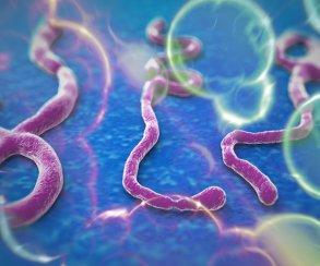 Эпидемия лихорадки Эбола подстегнула загрузки Plague Inc.
