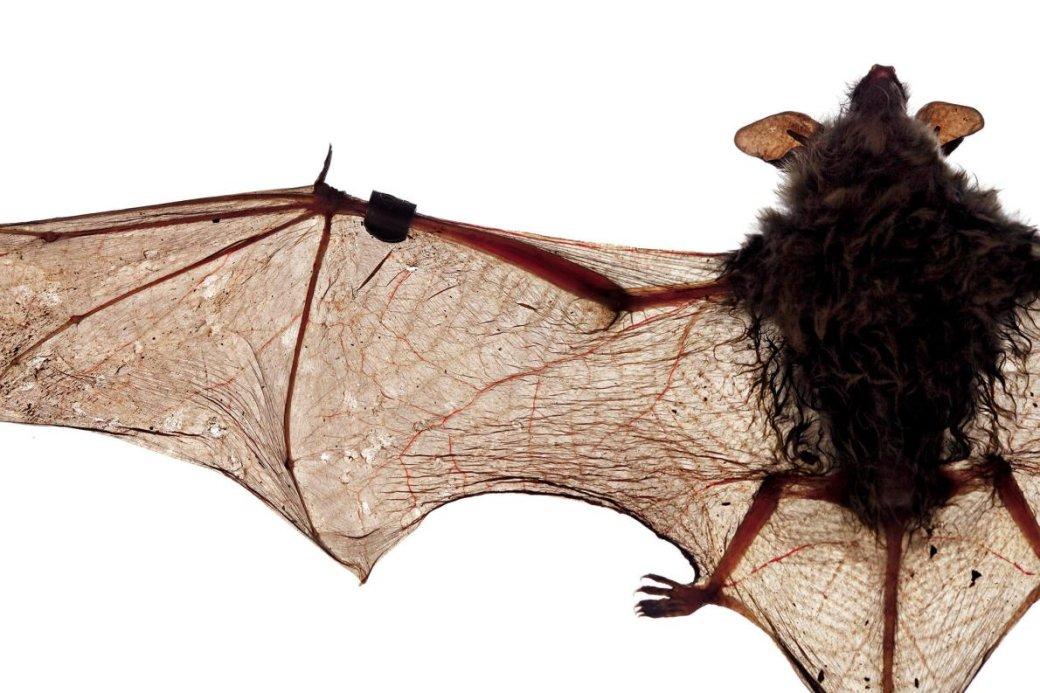 Хэллоуин еще некончился: лучшие фотографии летучих мышей отNatGeo | Канобу - Изображение 4689