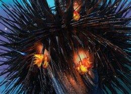 «Гамбит девятихвостого лиса»— лучшая новеллизация несуществующей игры иотличный роман сам посебе