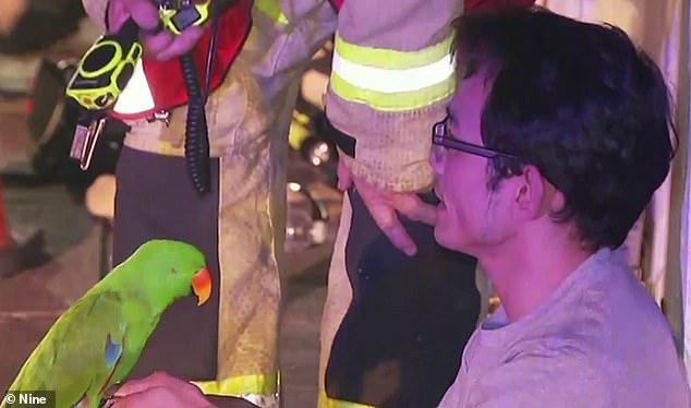 ВАвстралии домашний попугай спас хозяина вовремя пожара