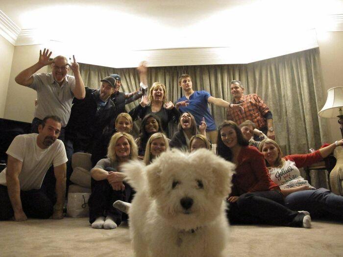Галерея дурацких рождественских фотографий, которые испортили собаки | Канобу - Изображение 5908