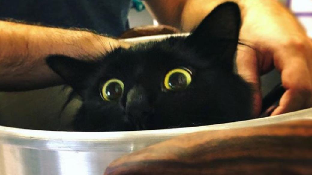 В Портленде живет кошка, которая вписывается в любой фильм. Она может даже напугать хоббитов! | Канобу - Изображение 0