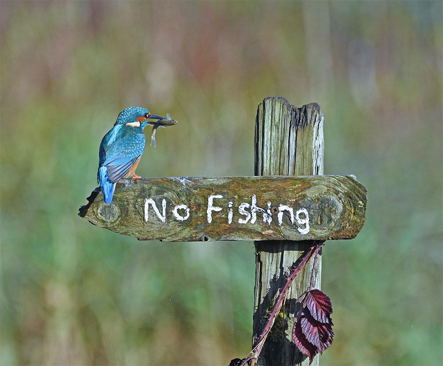 Позитивная галерея: 40 фото сконкурса насамый смешной снимок дикой природы   Канобу - Изображение 3963